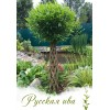Живое плетеное дерево