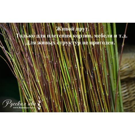 Прут в коре литовский - для плетения
